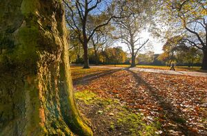 UK, England, London, Hyde Park in Autumn
